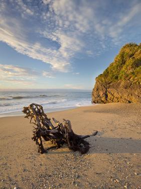Tree Stump on the Beach, Ship Creek, West Coast, Tasman Sea, South Island, New Zealand by Rainer Mirau