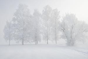 Trees at the Wintry Kochelsee, Tolzer Country, Bavaria, Germany by Rainer Mirau