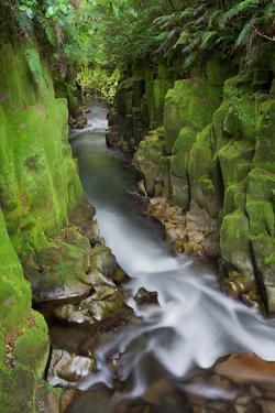 Whaiti-Nui-A-Toi Canyon, Whirinaki Forest Park, Bay of Plenty, North Island, New Zealand by Rainer Mirau