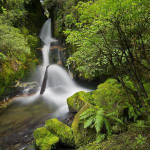 Whirinaki Falls, Whirinaki Forest Park, Bay of Plenty, North Island, New Zealand by Rainer Mirau