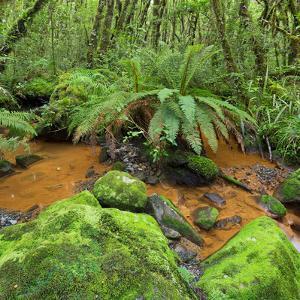 Wood, Ferns, Brook, Fiordland National Park, Southland, South Island, New Zealand by Rainer Mirau