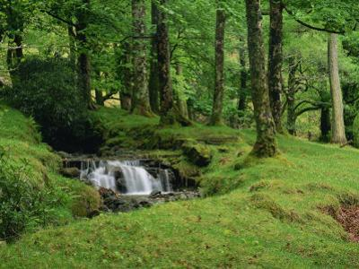 Stream Cascades over Rocks in Woods at Delphi, County Mayo, Connacht, Eire, Europe by Rainford Roy