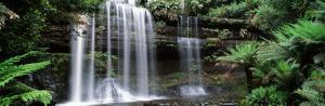 Rainforest, Mt. Field National Park, Tasmania, Australia