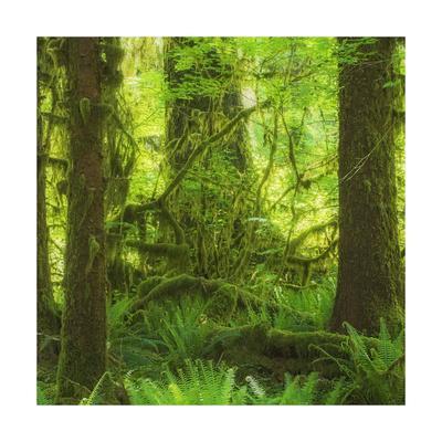 https://imgc.allpostersimages.com/img/posters/rainforest-square_u-L-Q1CAKVF0.jpg?artPerspective=n