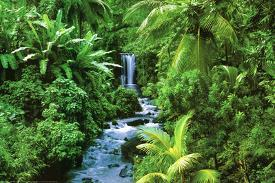 Affordable Natural Landscape Posters for sale at AllPosters com