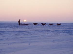 Alaska: Native Alaskan Moving on a Dog-Sled over the Ice, with the Midnight Sun in the Background by Ralph Crane