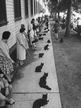 "Owners with Their Black Cats, Waiting in Line For Audition in Movie ""Tales of Terror"" by Ralph Crane"