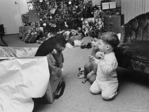 Raymond and Susie McFarland Looking at Their New Airedale Puppy Leaning Out of a Christmas Gift Box by Ralph Crane