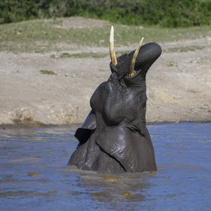 Africa. Tanzania. African elephant bathing at Ndutu, Serengeti National Park. by Ralph H. Bendjebar