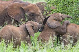 Africa. Tanzania. African elephants at Tarangire National Park, by Ralph H. Bendjebar