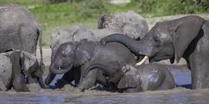 Africa. Tanzania. African elephants bathing at Ndutu, Serengeti National Park. by Ralph H. Bendjebar