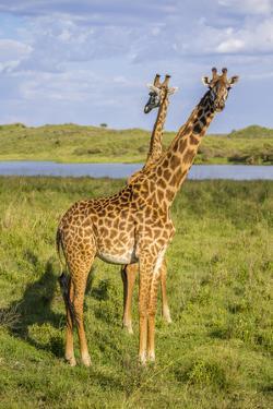 Africa. Tanzania. Masai giraffes at Arusha National Park. by Ralph H. Bendjebar