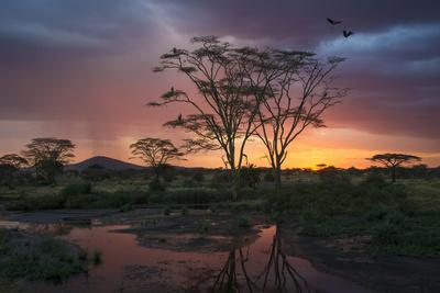 Africa. Tanzania. Sunset lights up a flock of Marabou storks in a marsh, Serengeti National Park.