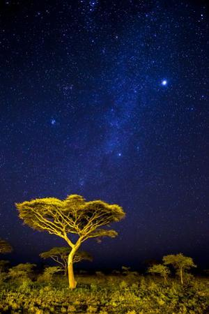 Africa. Tanzania. The Milky Way illuminate the night sky at Ndutu in Serengeti National Park. by Ralph H. Bendjebar