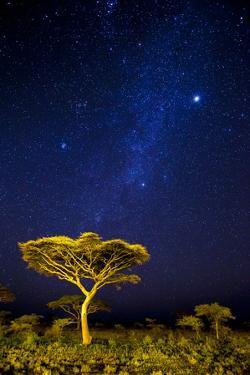 Africa. Tanzania. The Milky Way illuminate the night sky at Ndutu in Serengeti National Park. by Ralph H. Bendjebar