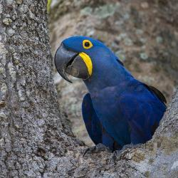 Affordable Macaw Prints for sale at AllPosters com