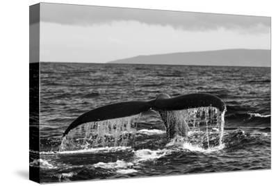 Black and White Photo of a Humpback Whale's Tail