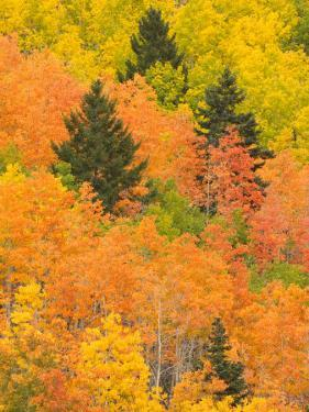 Leaves of a Forest Change Colors in Autumn, Santa Fe, New Mexico, USA by Ralph Lee Hopkins