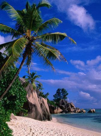 Palm Tree on Beach, Anse Source D'Argent, Seychelles