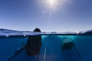 Split Level View of Humpback Whales Dancing at the Ocean's Surface by Ralph Lee Hopkins