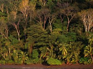 Tropical Rainforest, Corcovado National Park, Puntarenas, Costa Rica by Ralph Lee Hopkins