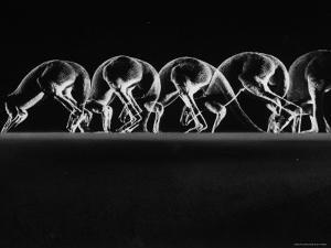 Multiple Exposures of Hopping Kangaroos by Ralph Morse