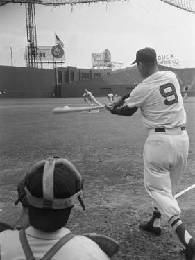 Ted Williams Batting at Fenway Park by Ralph Morse