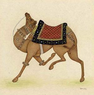 Camel from India I by Ram Babu