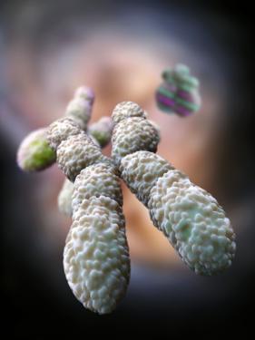 Chromosome, Artwork by Ramon Andrade