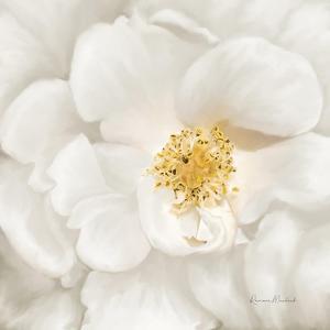 Neutral Rose No. 4 by Ramona Murdock