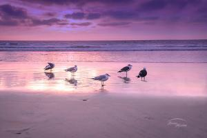 Seagull Beach I by Ramona Murdock