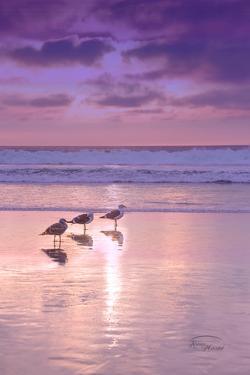 Seagull Beach II by Ramona Murdock