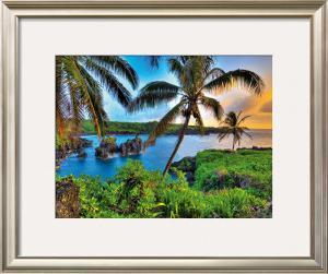 Where Da Coconuts Grow by Randy Jay Braun
