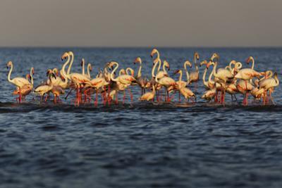 Flamingos on Lake Turkana Outside Elyse Springs by Randy Olson
