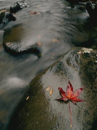 River Scenics in Smokies by Randy Olson