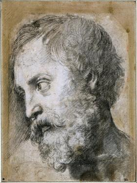 Head of an Apostle (Study for Transfiguratio), 1519-1520 by Raphael