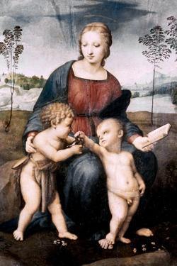 Madonna Del Cardellino, 1507 by Raphael
