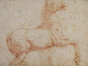Study of One of the Quirinal Marble Horses, C.1515-17 by Raphael