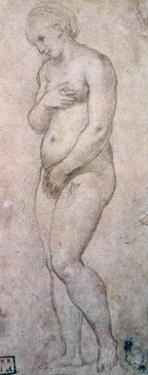 Study of Venus, C1500-1520 by Raphael