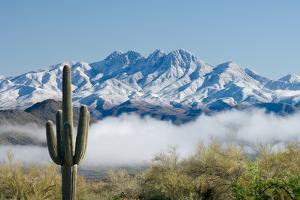 Saguaro and Four Peaks by raphoto