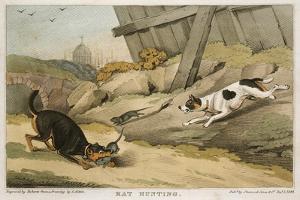 Rat Hunting, 1823