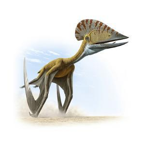 Tupuxuara, a Type of Pterosaur, Lived in Present Day Brazil by Raul D. Martin