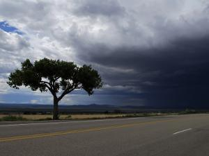 A Lone Tree on Highway 68 to Taos and Storm Clouds by Raul Touzon