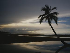 A Silhouetted Palm Tree on a Twilit Beach by Raul Touzon