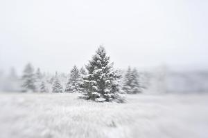 A Snow Covered Evergreen Trees by Raul Touzon