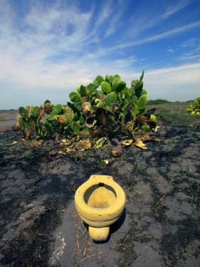 An Toilet on a Black Sand Beach with Cacti by Raul Touzon