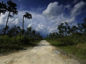 Dirt Road in Everglades National Park by Raul Touzon
