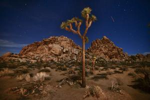 Joshua Trees Lit by Moonlight in Joshua Tree National Park by Raul Touzon