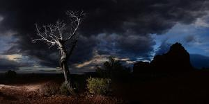 Mesquite Tree in Stormy Weather at Arches National Park by Raul Touzon