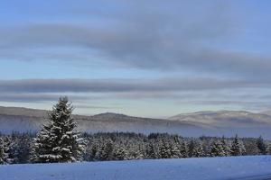 Snow Covered Evergreen Trees and a Blue Sky with Clouds by Raul Touzon